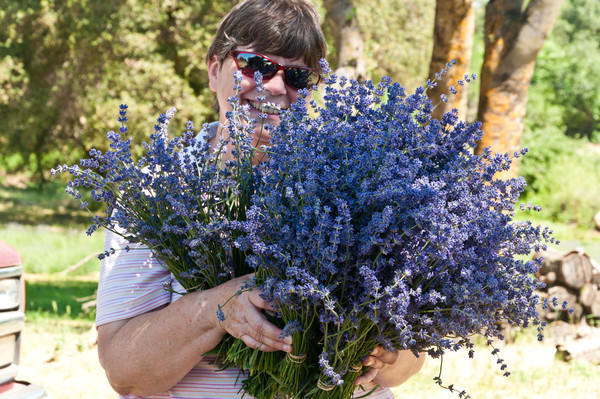 Lavender and bee hives: Open house at The Lamm Farm on June 10